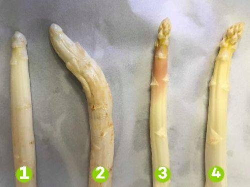Vier soorten witte asperges